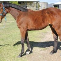 Cera Ducati - known as Handsome at home with Team Joyce