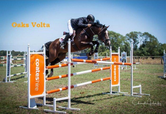 Oaks Volta impeccable bloodlines & ability