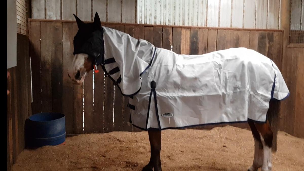 Roma mesh horse rug