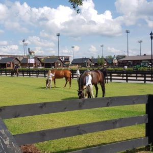 Special grass areas for riders to take horses for a pick