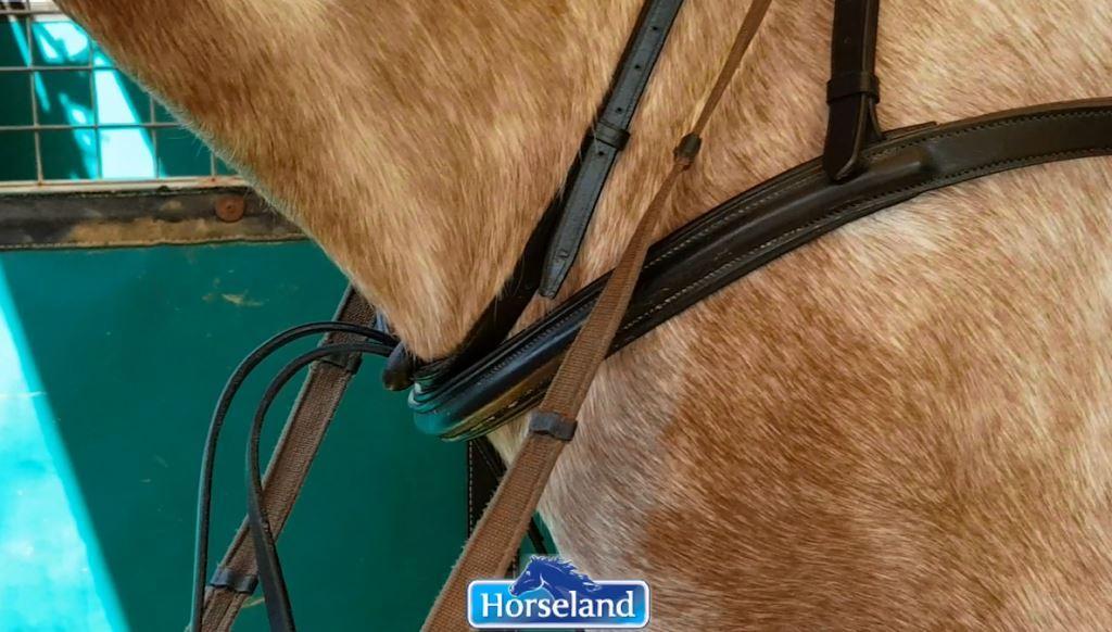 Horseland Tack Talk
