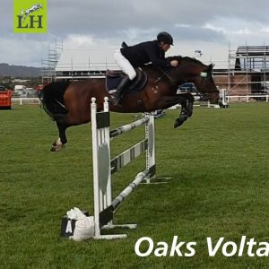 Oaks Volta on course