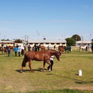 Horse action at Horsham