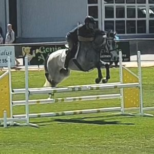 LH Greythorne in action at Swan Hill Show